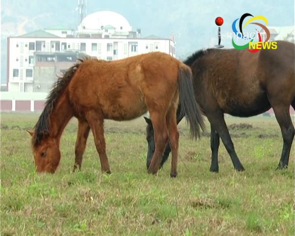 Co-ordinating Committee of Polo Clubs urges govt to frame policy to save Manipuri pony